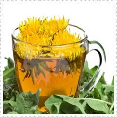 Fat Burner Fitne Chrysanthemum Tea Drink